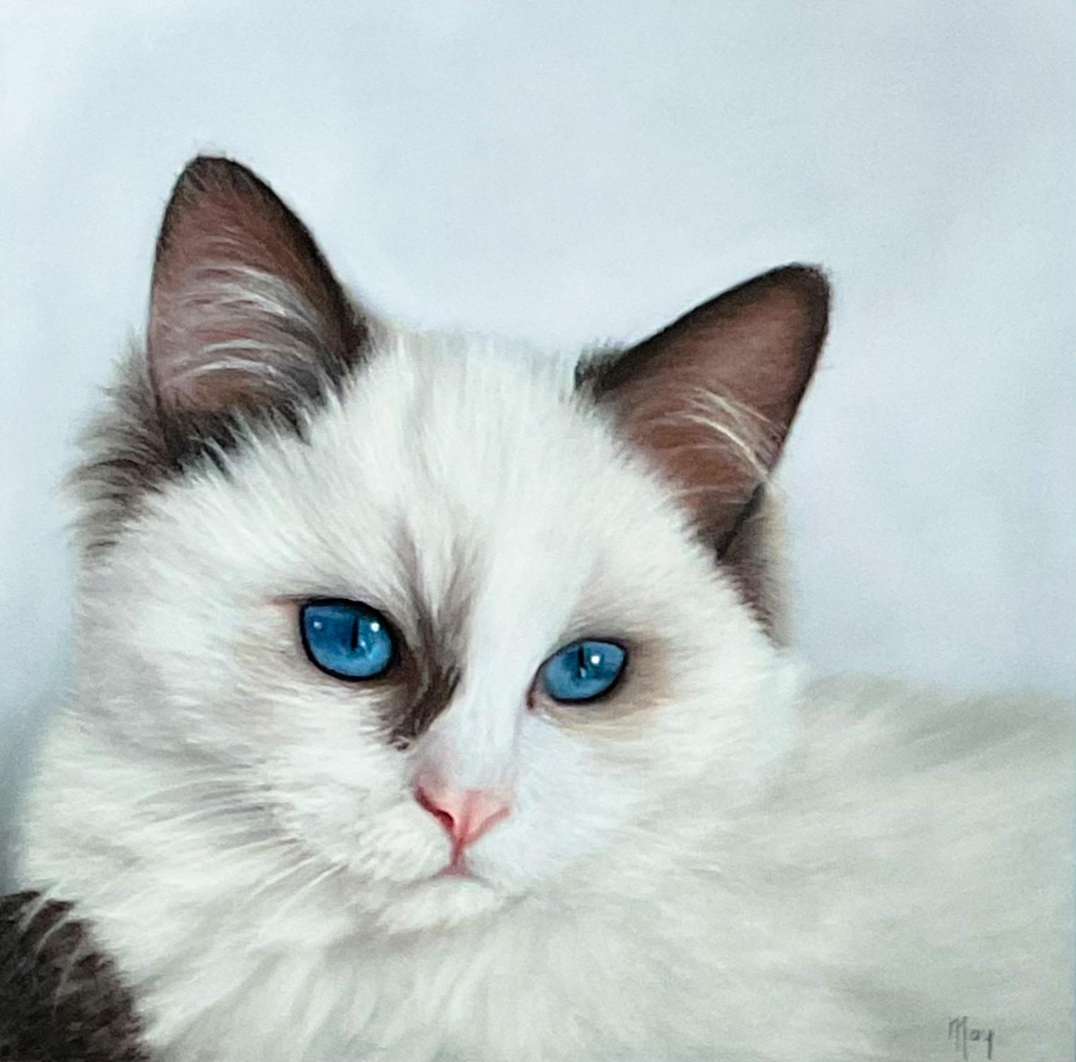 Pastel portret met pastel potlood op Pastelmat van een kat Blaze genaamd