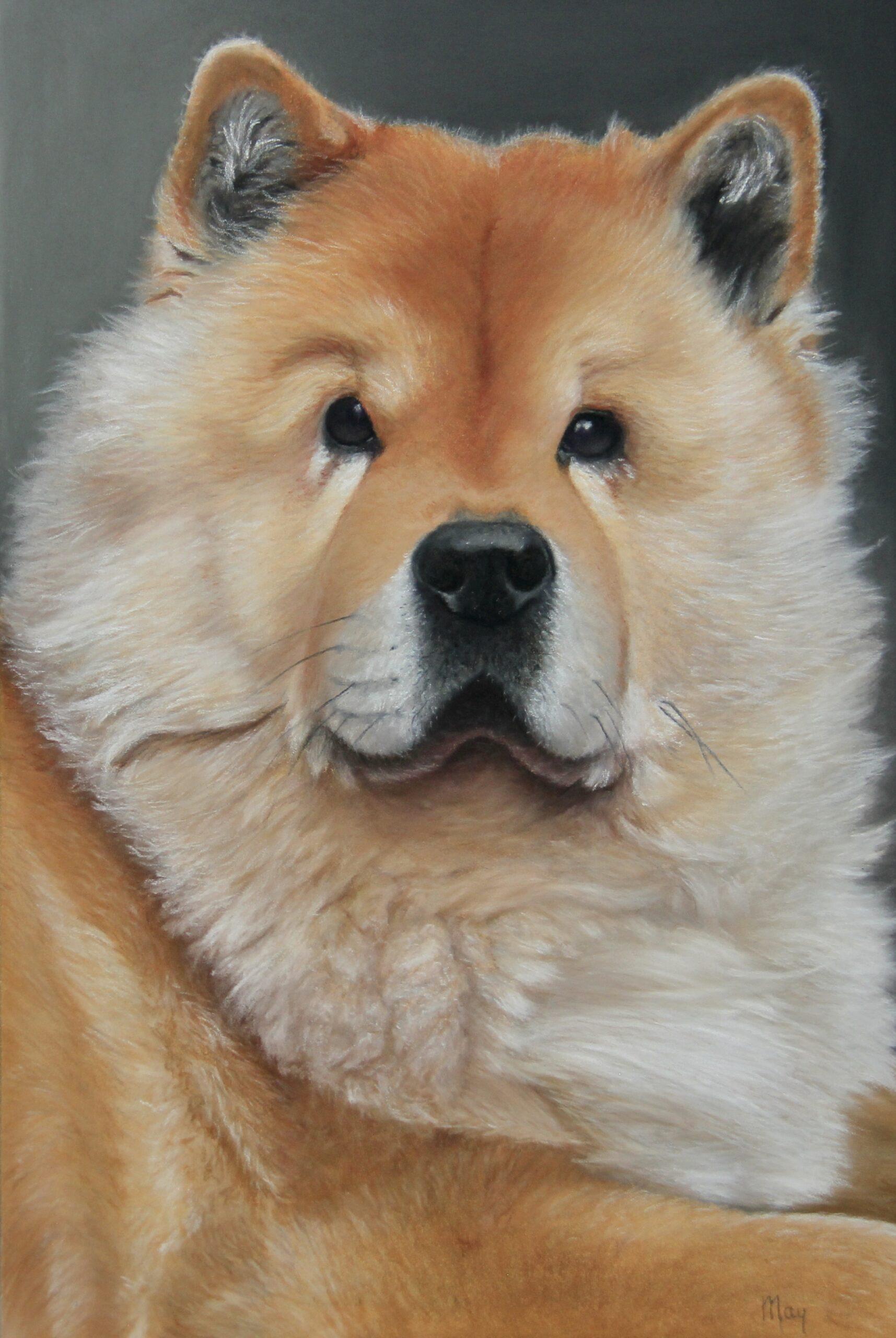 Pastel portret met pastel potlood op Pastelmat van een hond een chowchow Kaya genaamd