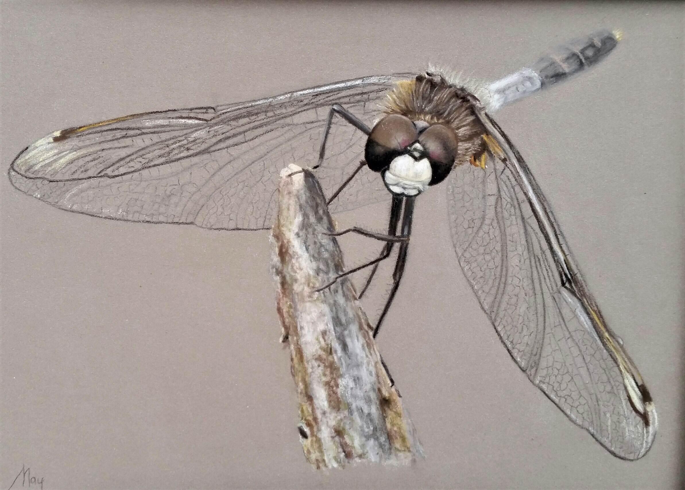 Pastel portret met pastel potlood op Pastelmat van een insect het is een libelle