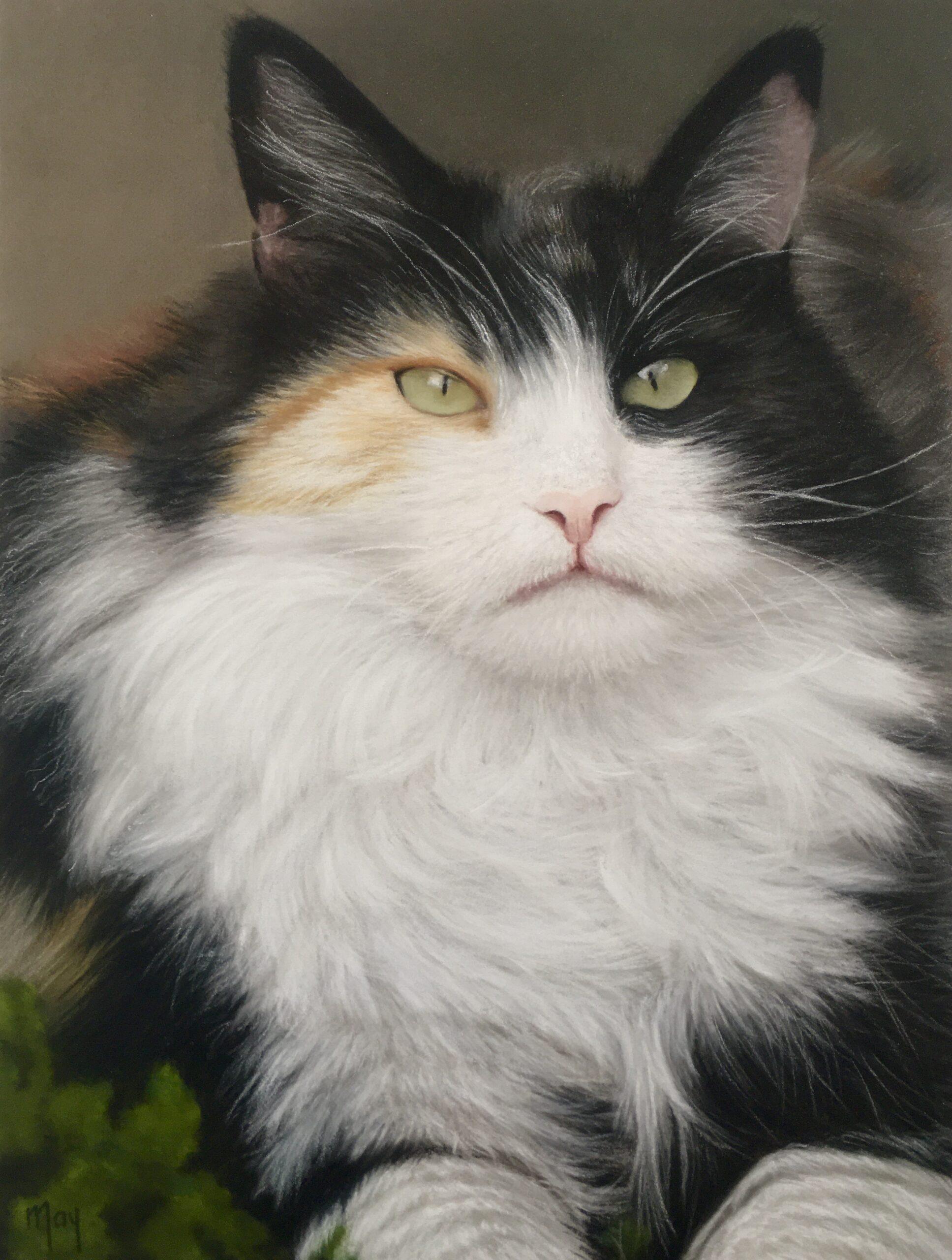 Pastel portret met pastel potlood op Pastelmat van een kat Dotje genaamd