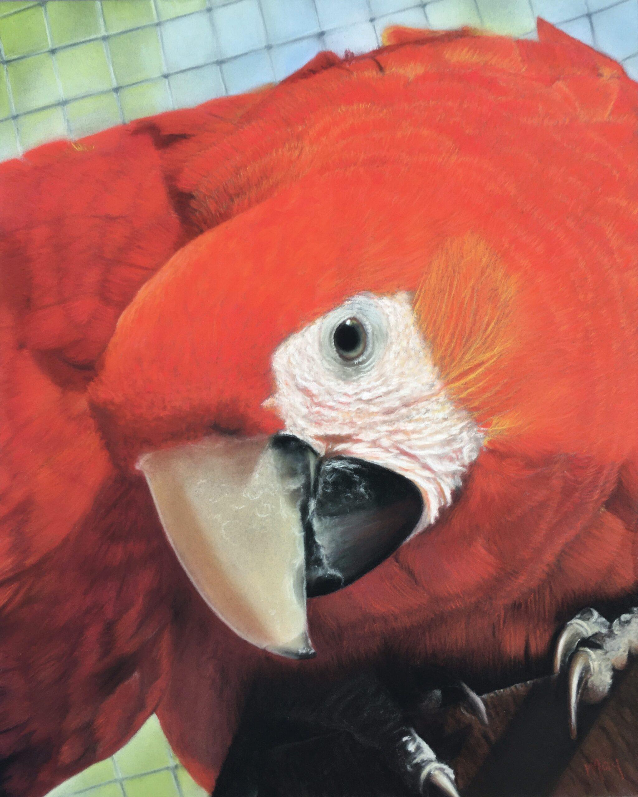Pastelportret van een ara papegaai